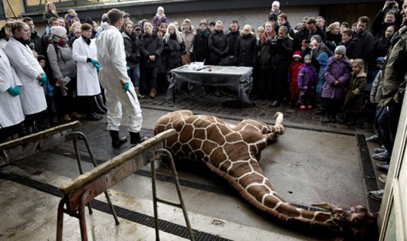 Zoo animals receive less than desirable treatment