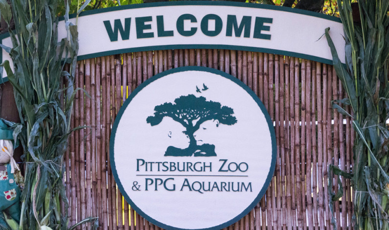 Where the Wild Things Are: Behind the cage at the Pittsburgh Zoo