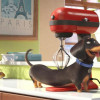 'Secret Life of Pets' stays true to its acronym: 'SLOP'