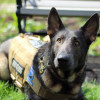 A Man's Best Friend: For this Duquesne student veteran, his service dog is an invaluable companion