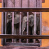 Elephant death at PGH zoo breeds ethical questions