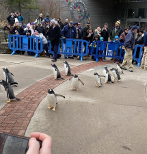 Penguins march and waddle at Pittsburgh Zoo event