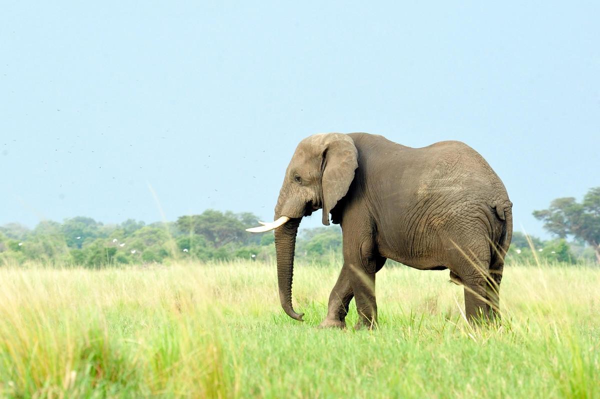 opinions_elephants