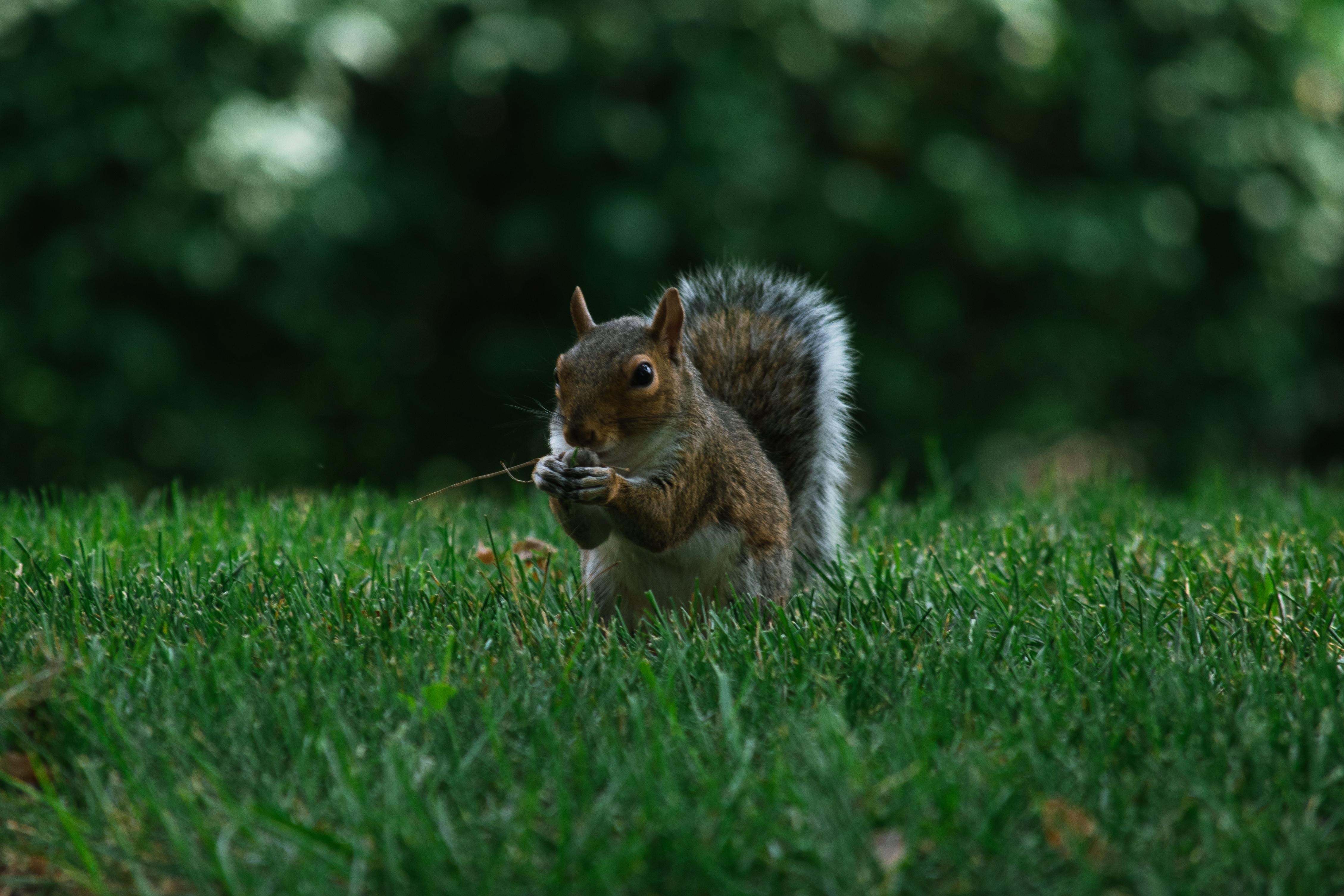 features_squirrel3_griffin